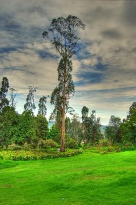 Kodaikanal Park