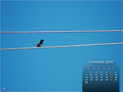 Bird Theme - February 2010 Calendar